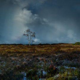 09. In Memory of Trees V
